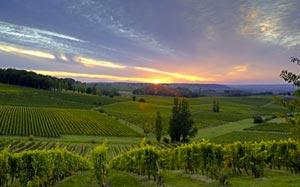 Vignobles de Bergerac dans le Périgord